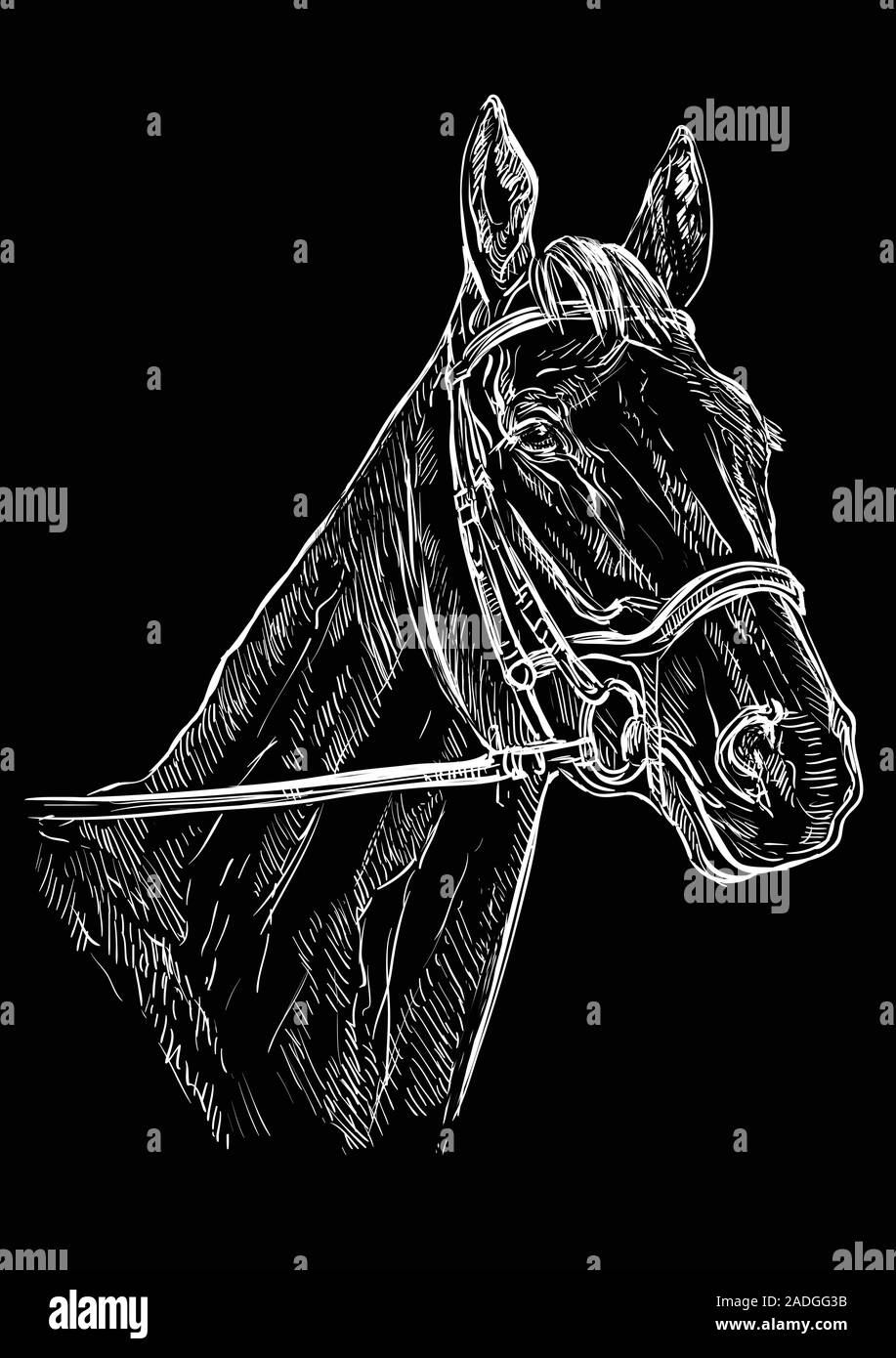 Horse Portrait With Bridle Horse Head In White Color Isolated On Black Background Vector Hand Drawing Illustration Retro Style Portrait Of Horse Stock Vector Image Art Alamy