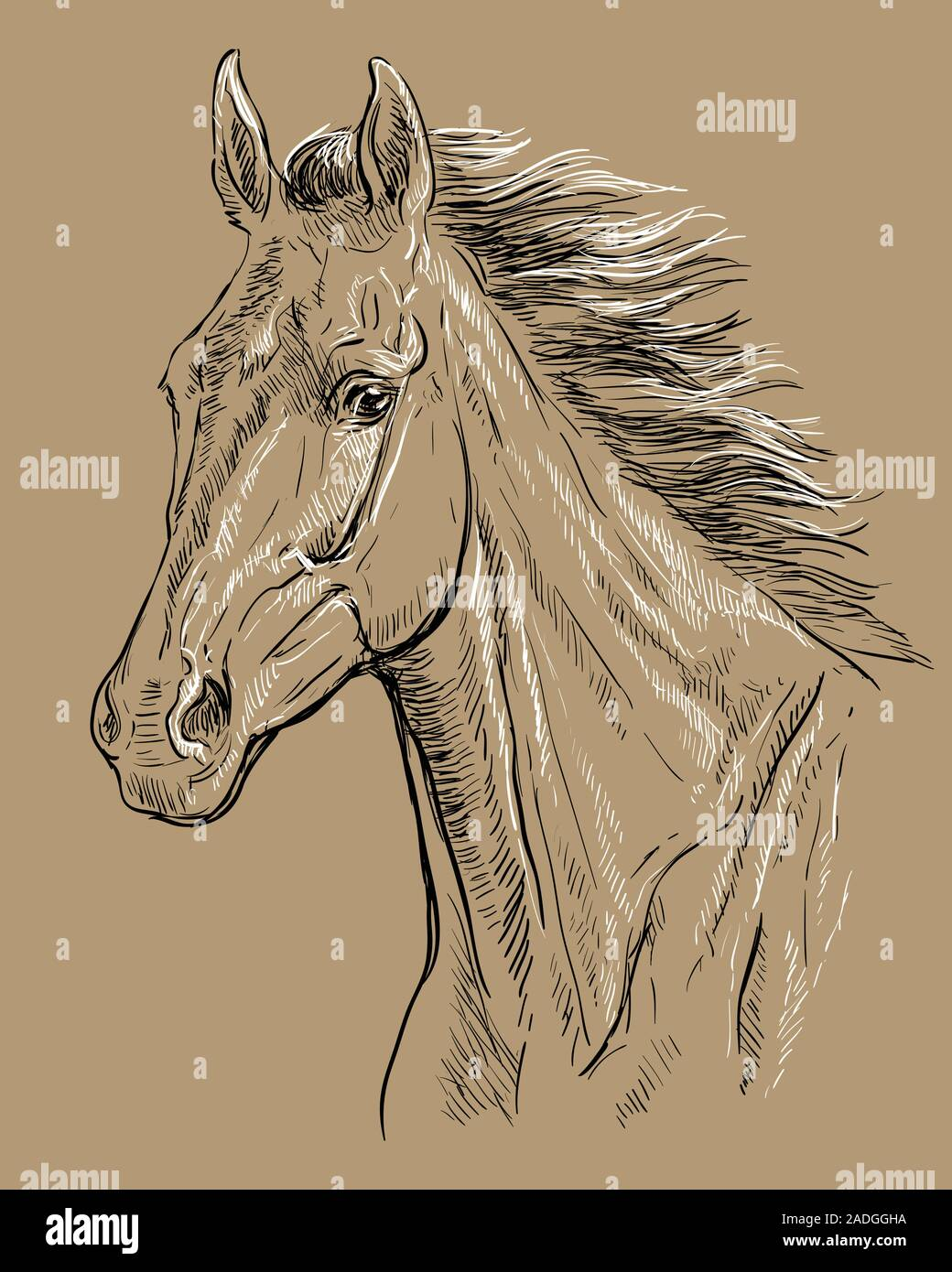 Hand Drawing Horse Portrait Horse Head With Long Mane In Black And White Colors Isolated On Beige Background Vector Hand Drawing Illustration Retro Stock Vector Image Art Alamy