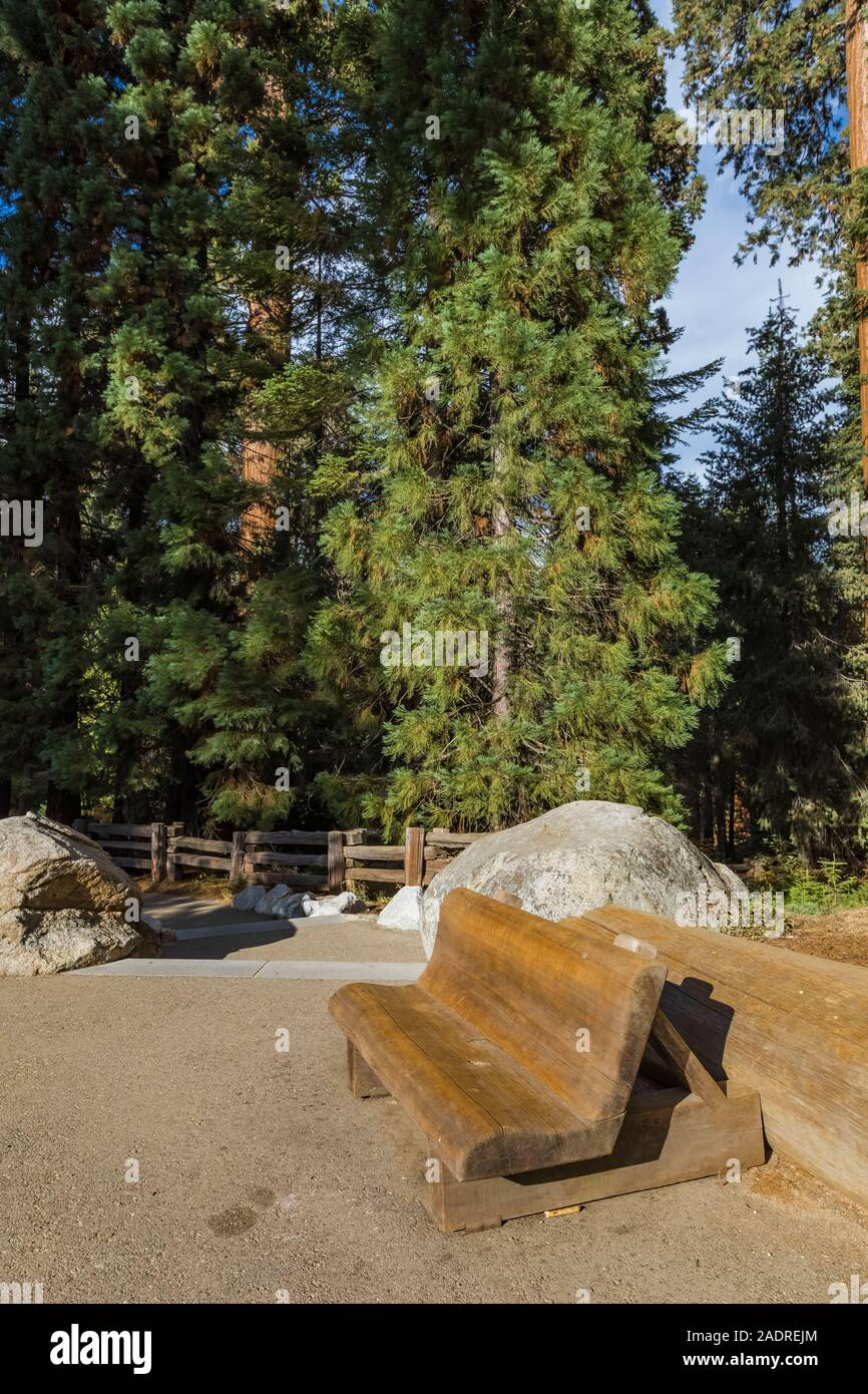 Bench made from a huge piece of wood at the Giant Forest Museum in Sequoia National Park, California, USA Stock Photo