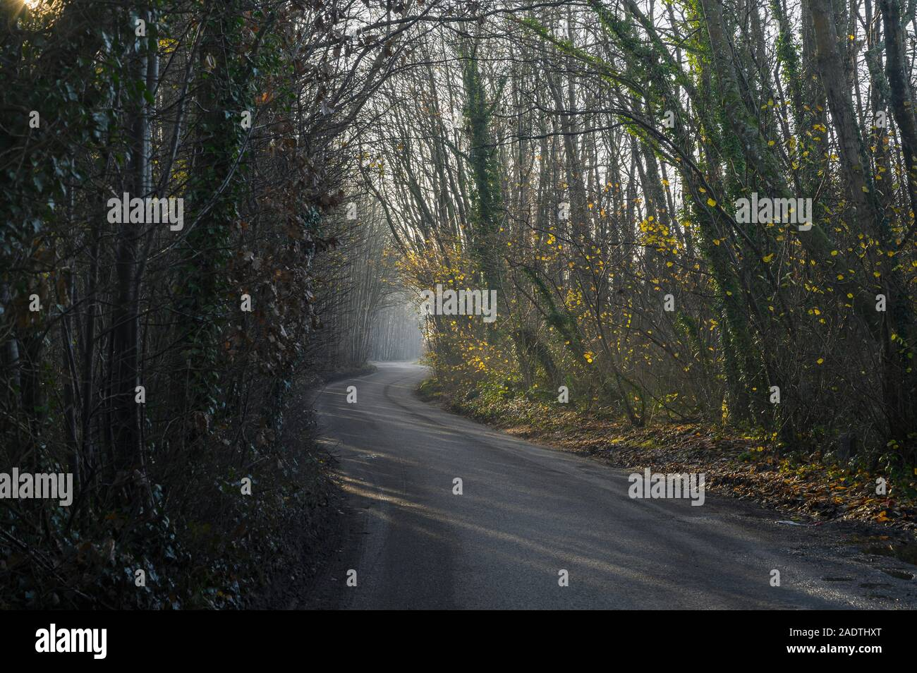 Morning sun filters through trees and a narrow country lane winds through  the woods Stock Photo