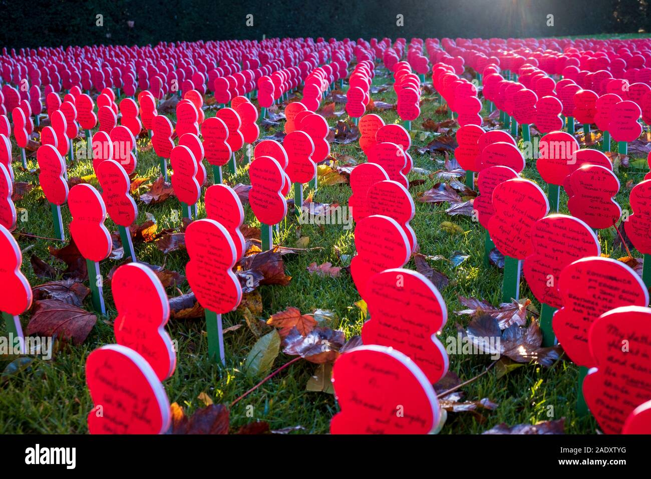 Field of poppies at the Menin Gate, Ypres Stock Photo