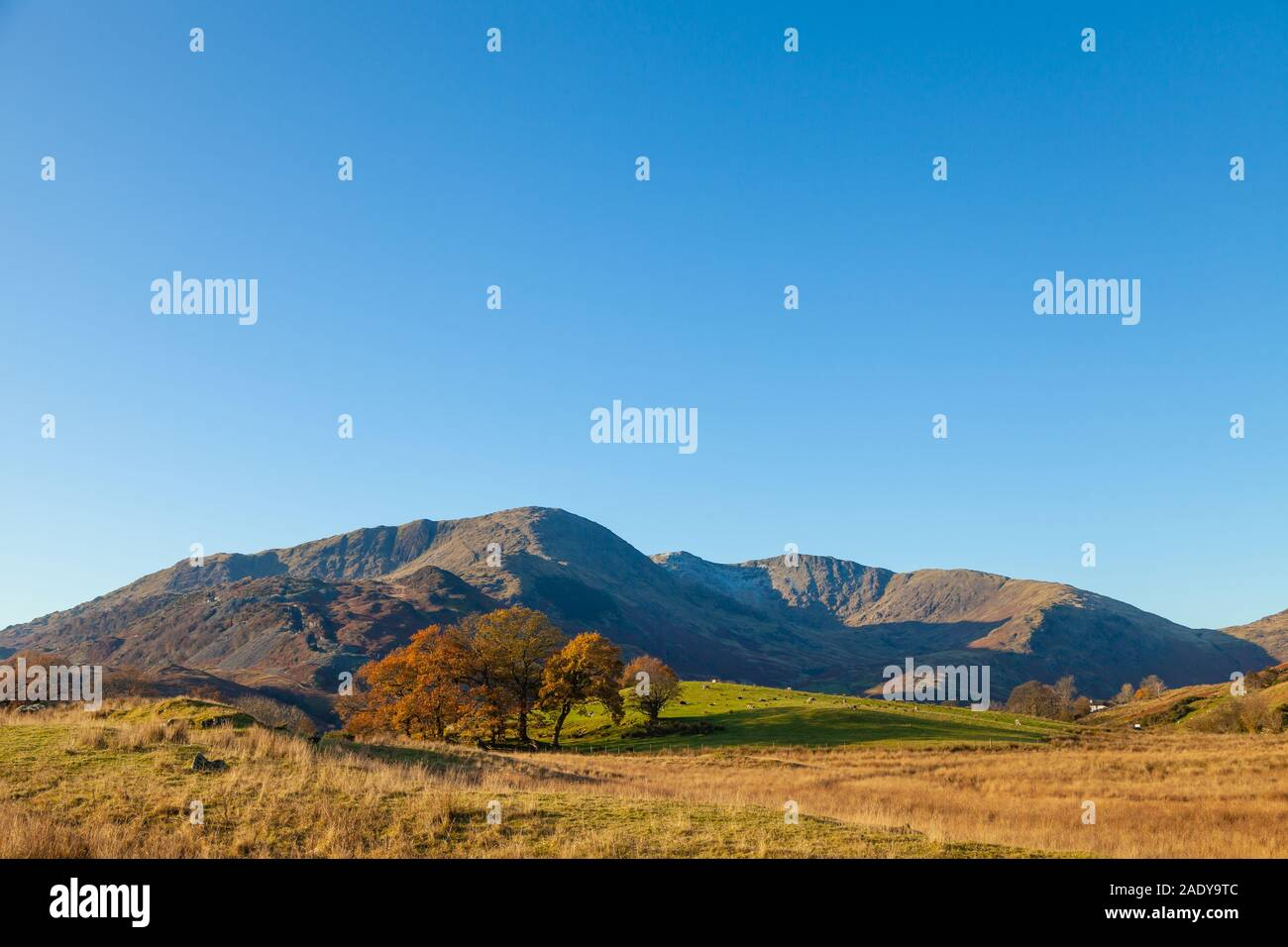Looking over to Wetherlam Hill and Great Carrs from near Elterwater, Lake District, Cumbria, England Stock Photo