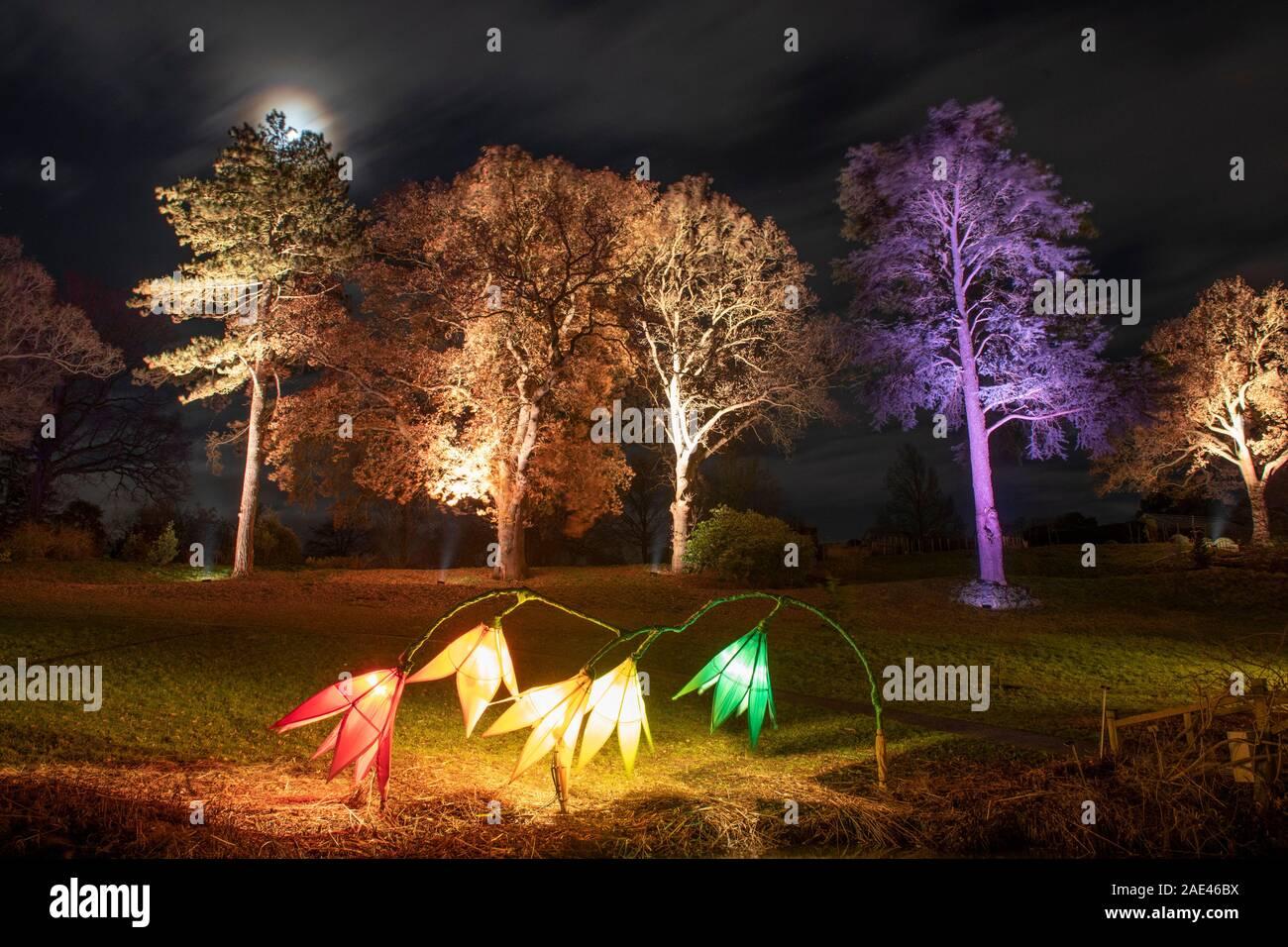 Rhs Wisley Surrey Uk Rhs Gardens Winter Glow 2019 6th December 2019 Preview Of Enchanting Trail