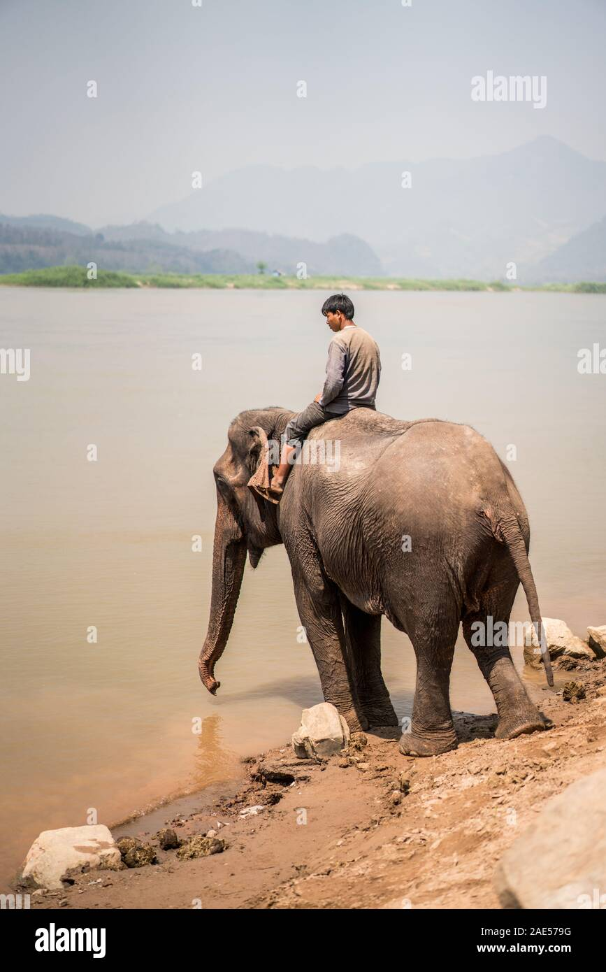 Bath with elephants, Luang Prabang Elephants Camp, Luang Prabang, Laos, Asia. Stock Photo