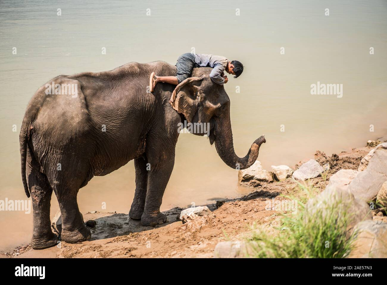 Bath with elephants, Luang Prabang Elephants Camp, Luang Prabang, Laos, Asia. Stock Photo
