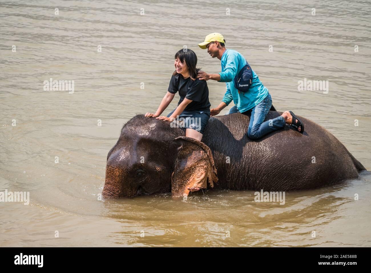 Tourists have bath with elephant, Luang Prabang Elephants Camp, Luang Prabang, Laos, Asia. Stock Photo