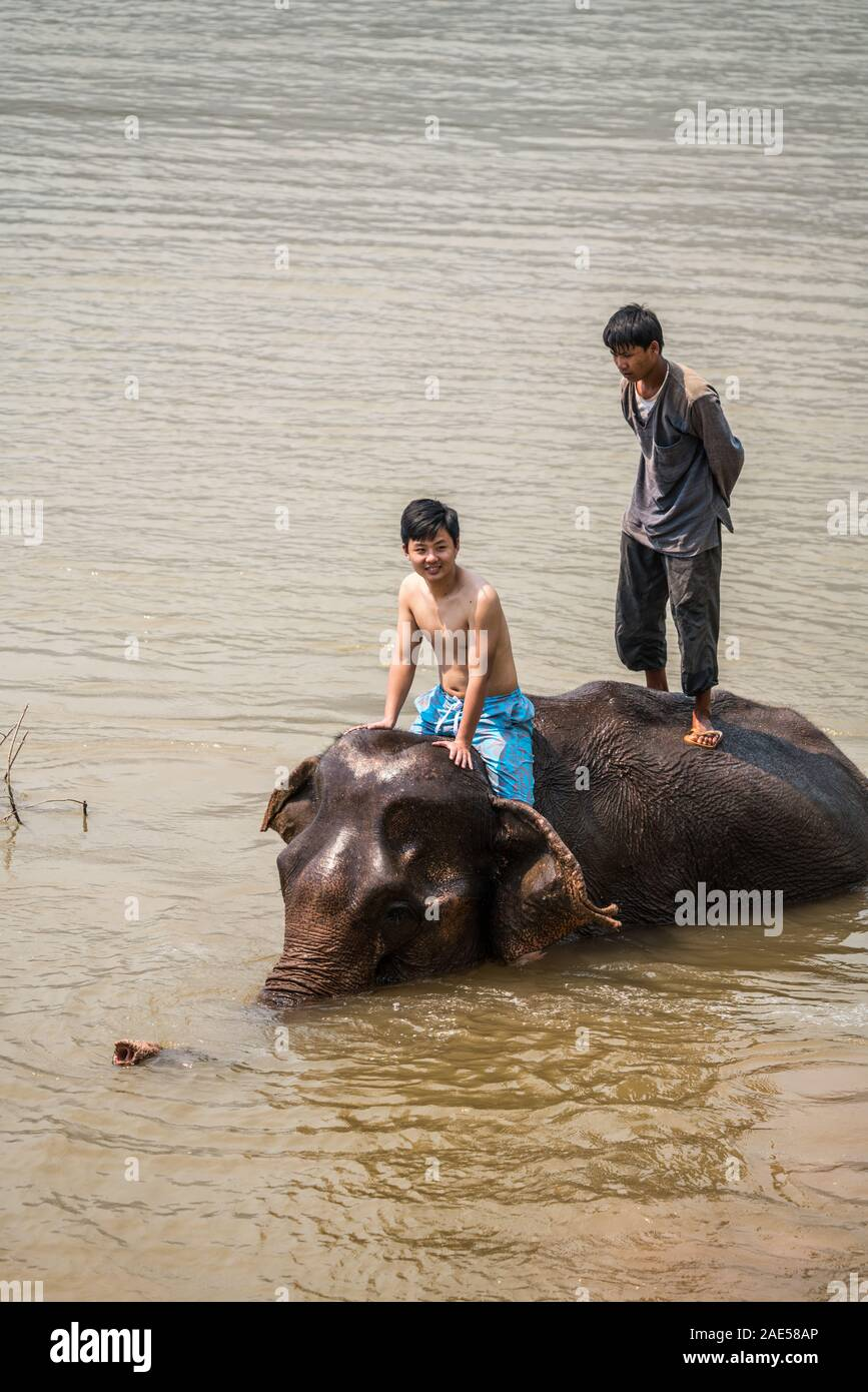 Tourists have bath with elephant, Luang Prabang Elephants Camp, Luang Prabang, Laos, Asia. Stock Photo