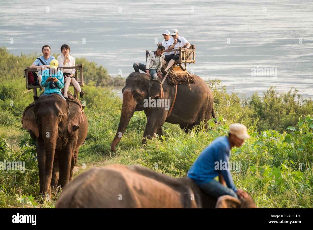 Tourists riding on elephants, Luang Prabang Elephants Camp, Luang Prabang, Laos, Asia. Stock Photo