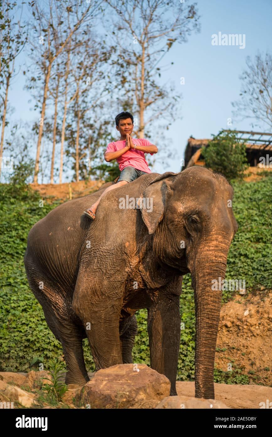 Luang Prabang Elephants Camp, Luang Prabang, Laos, Asia. Stock Photo