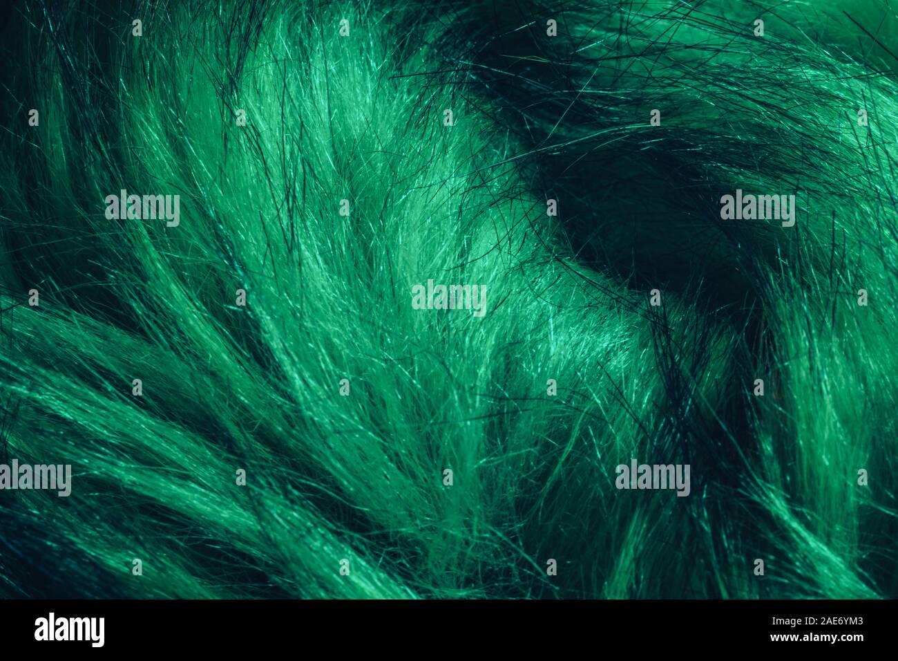Close up Aqua Menthe Beautiful Fur background texture. Stock Photo