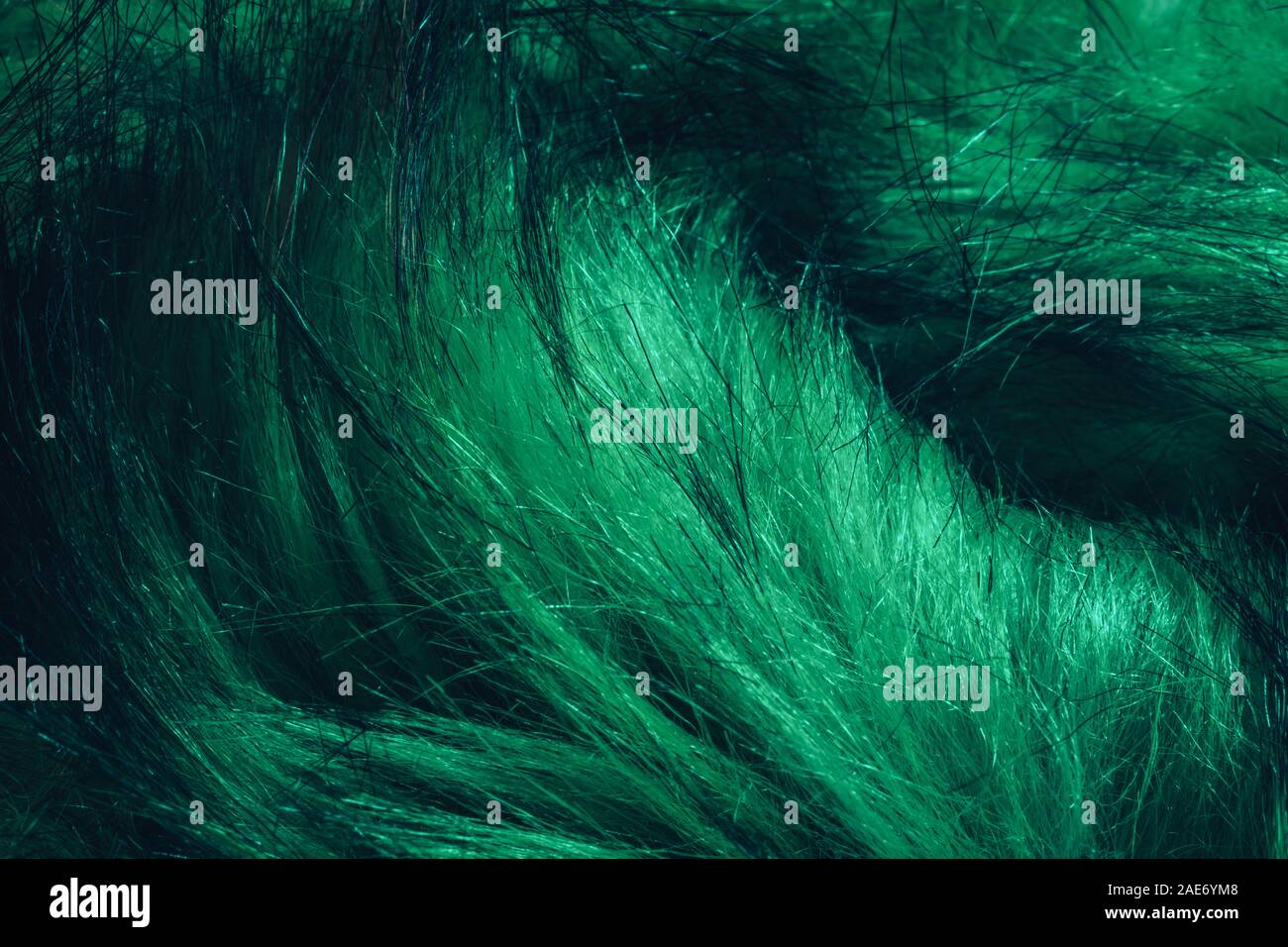 Close up Aqua Menthe Beautiful Fur background texture. Stock Photo