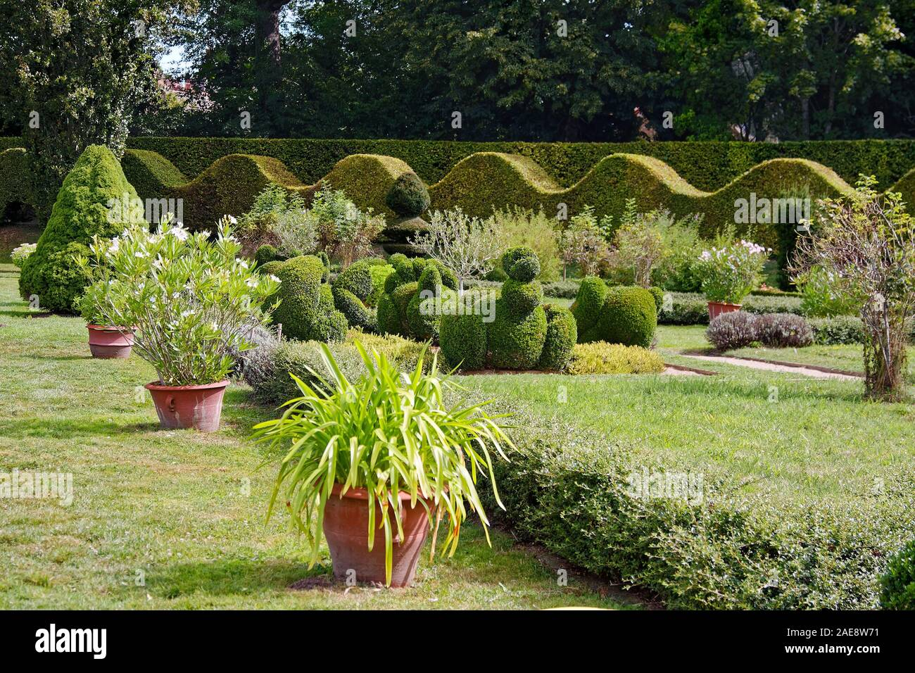 Garden Scene Grass Flowers Shrubs Potted Plants Topiaries