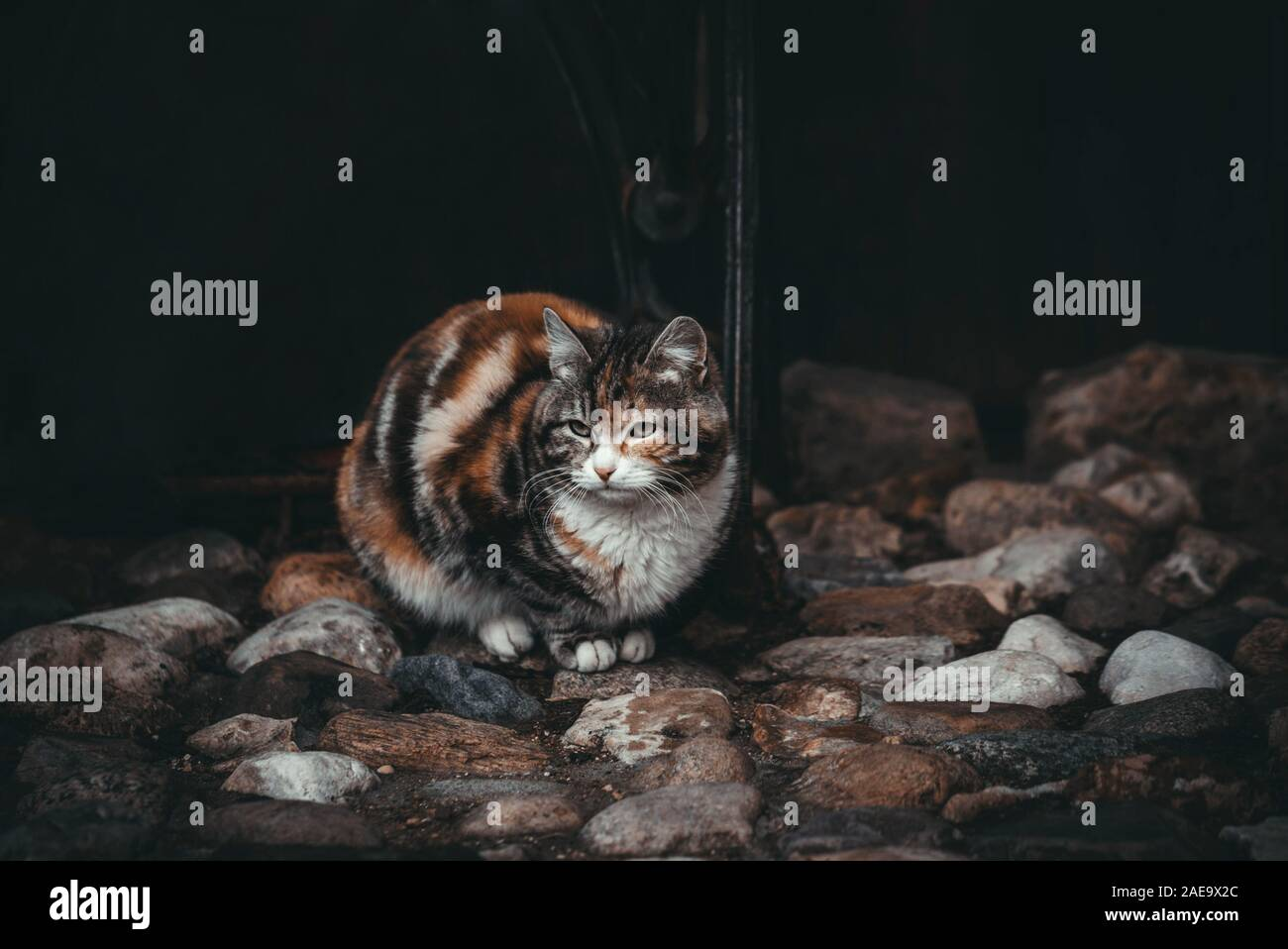 Sad cat on a black background. Waiting for the owner. Beautiful colorful cat on colorful stones. Street cats. Stock Photo