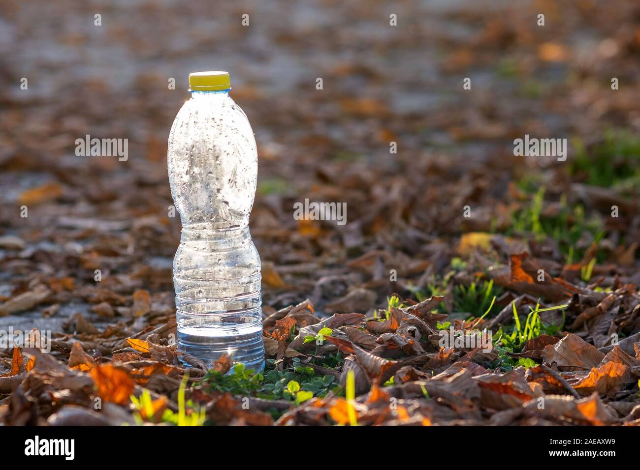 Used plastic bottle thrown away on grass covered ground outdoors. Pollution of nature concept. Stock Photo