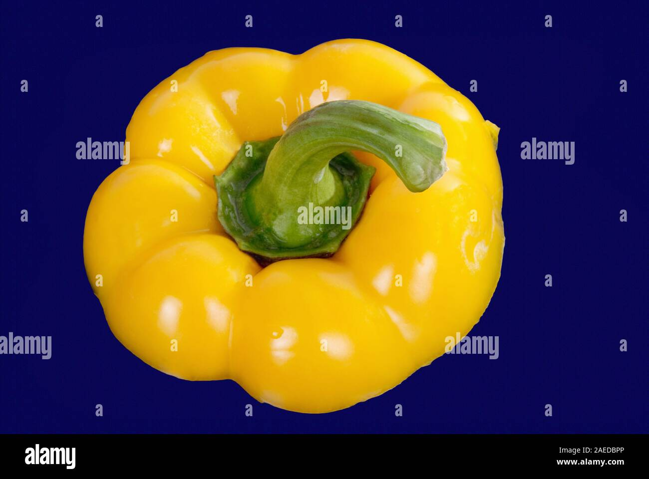 Directly above a fresh yellow bell pepper with the green colored stem on a dark blue background. Stock Photo