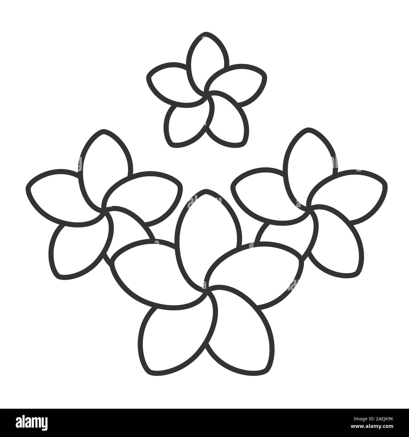 Plumeria Flowers Black And White Stock Photos Images Alamy