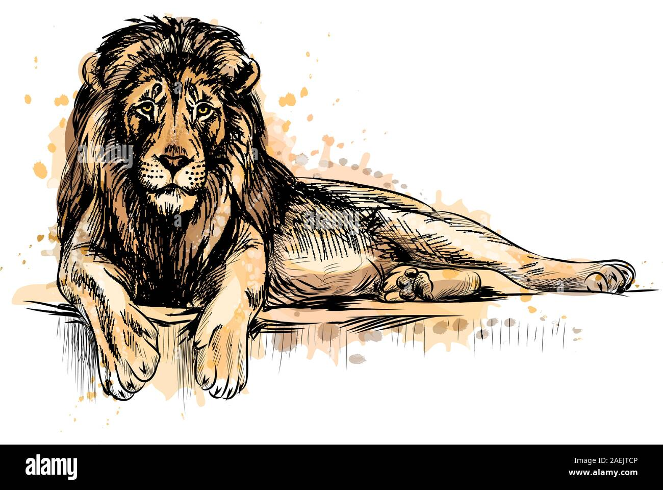 Portrait of a lion from a splash of watercolor, hand drawn sketch. Vector illustration of paints Stock Vector