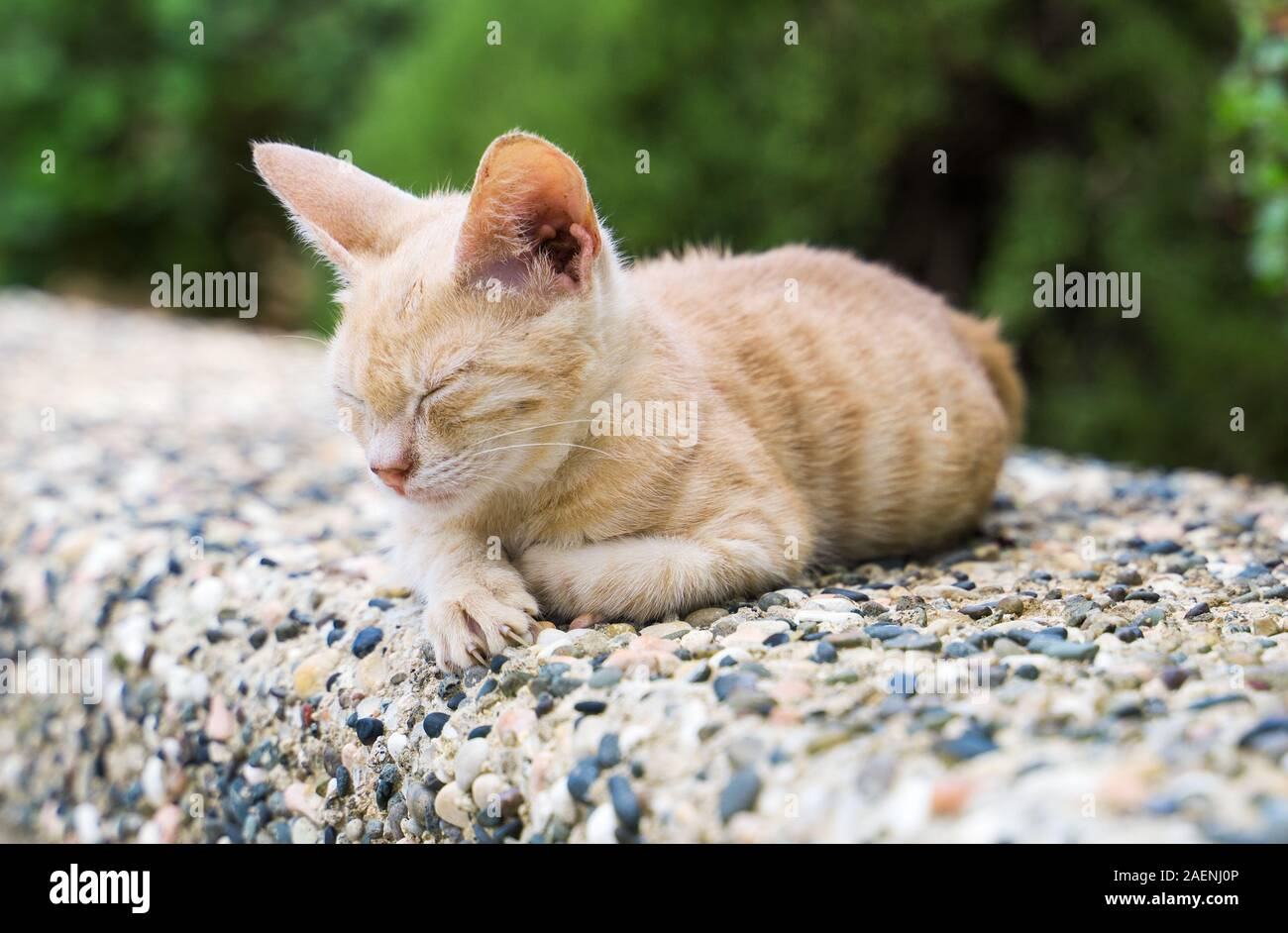 Dirty stray feral kitty on the street. Stock Photo