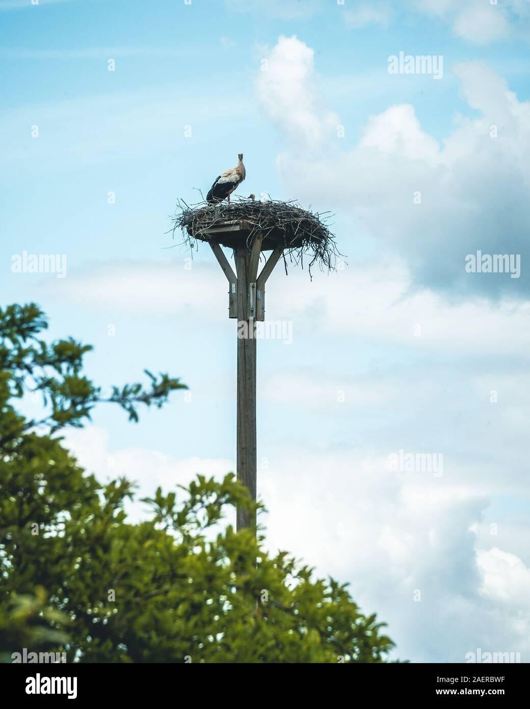 Eine Storchenfamilien nahe der Ehmetsklinge im Naturpark Stromberg-Heuchelberg Stock Photo