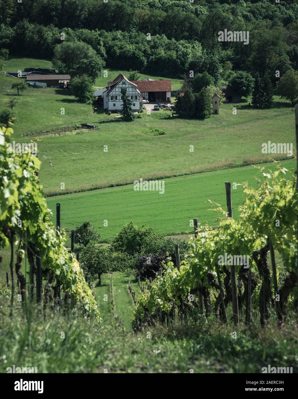 Gemütlicher Ausblick vom Derdinger Horn über Weinberge Stock Photo
