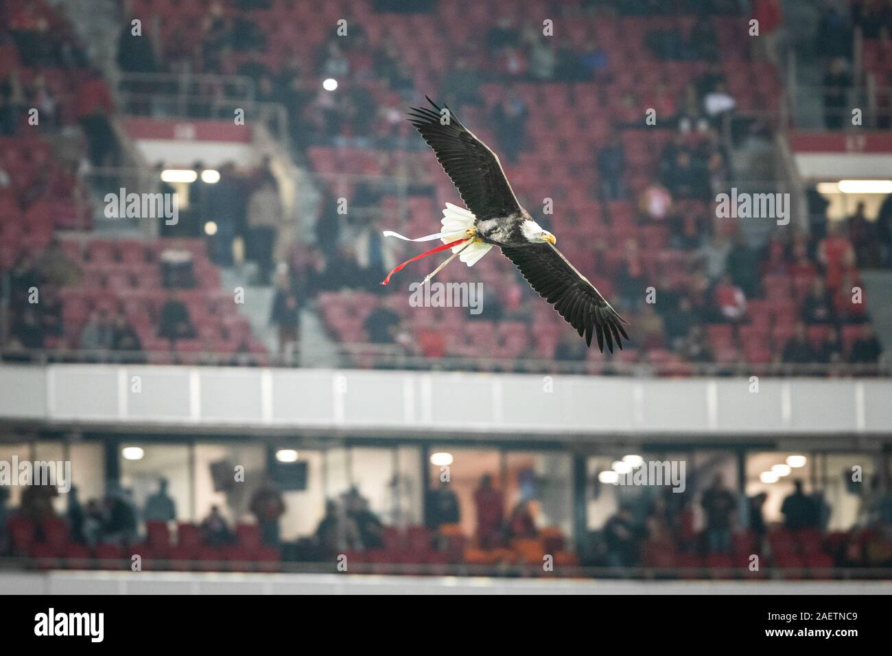 Lisbon Portugal 10th Dec 2019 An Eagle Vitoria Of Sl Benfica Mascot Flies Over The Stadium