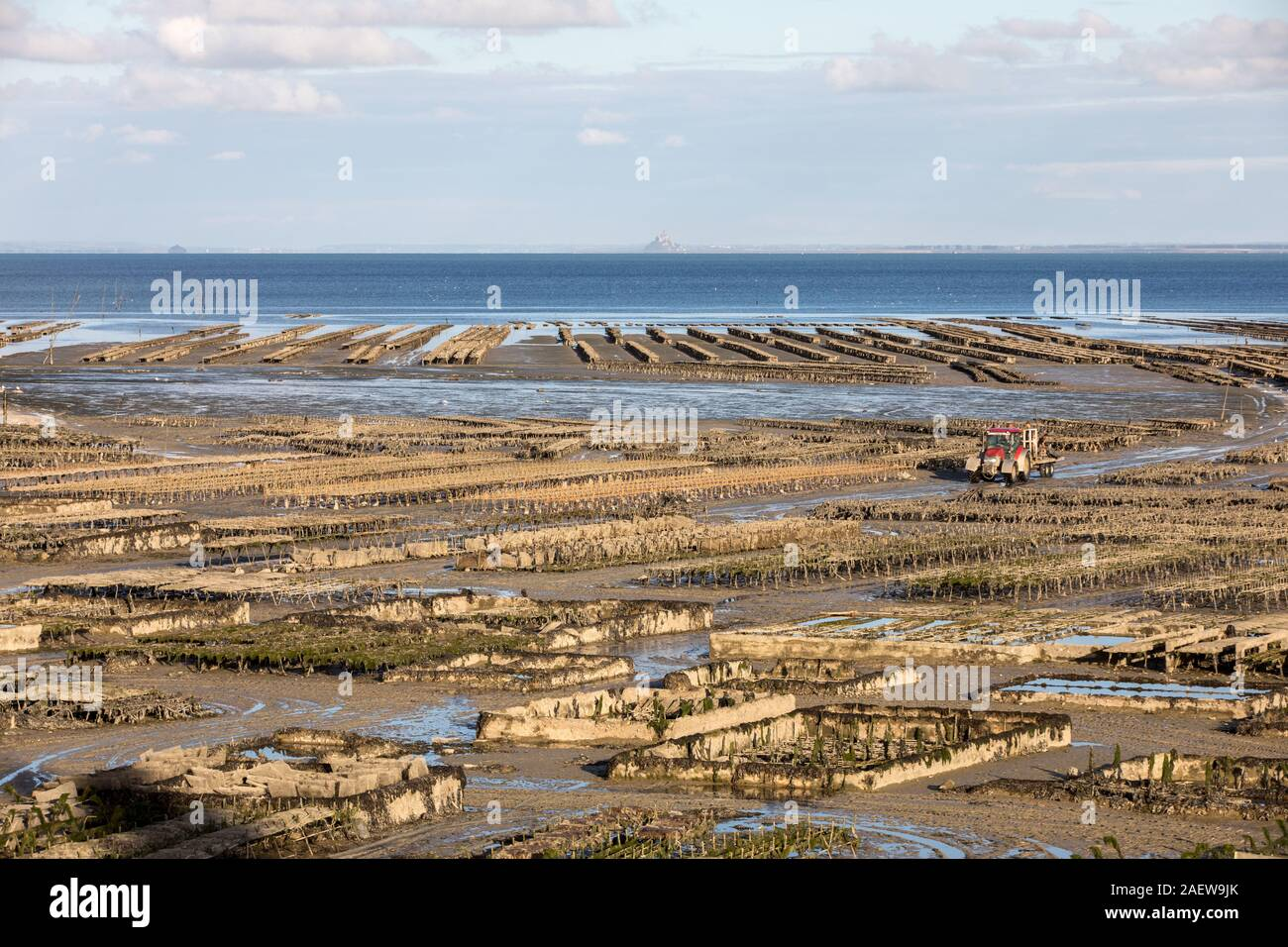 Oyster beds at low tide in oyster farm, Cancale, Brittany, France Stock Photo