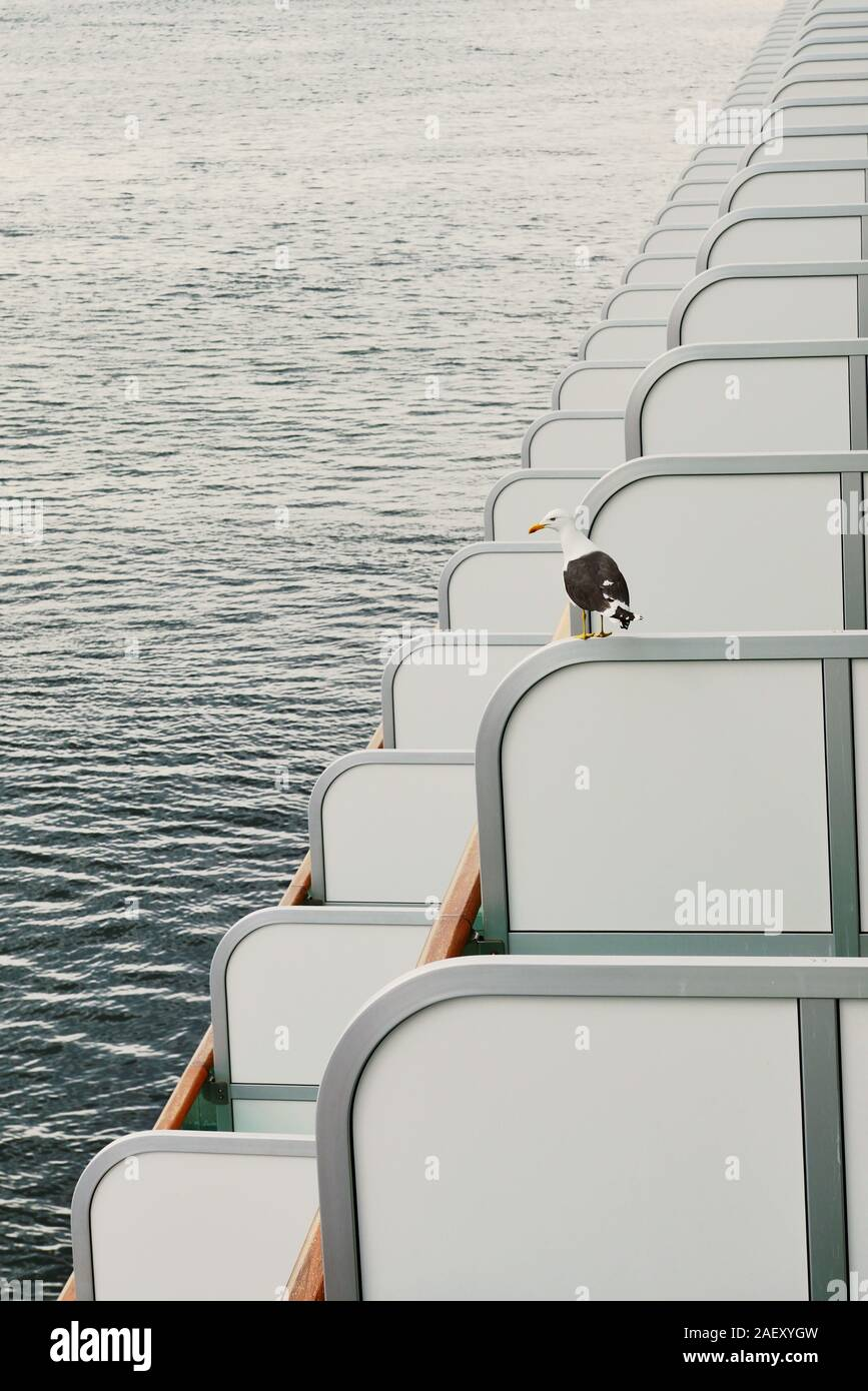 A great black-backed gull perched on the balcony partition of a cruise ship. Stock Photo