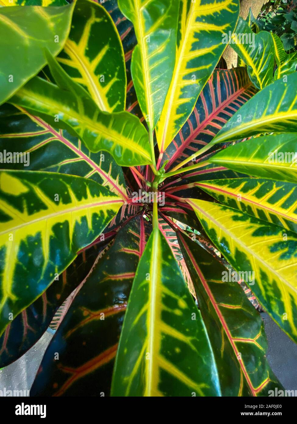 Green Tropical Plants In Jungle Garden Close Up Of Leaves Stock