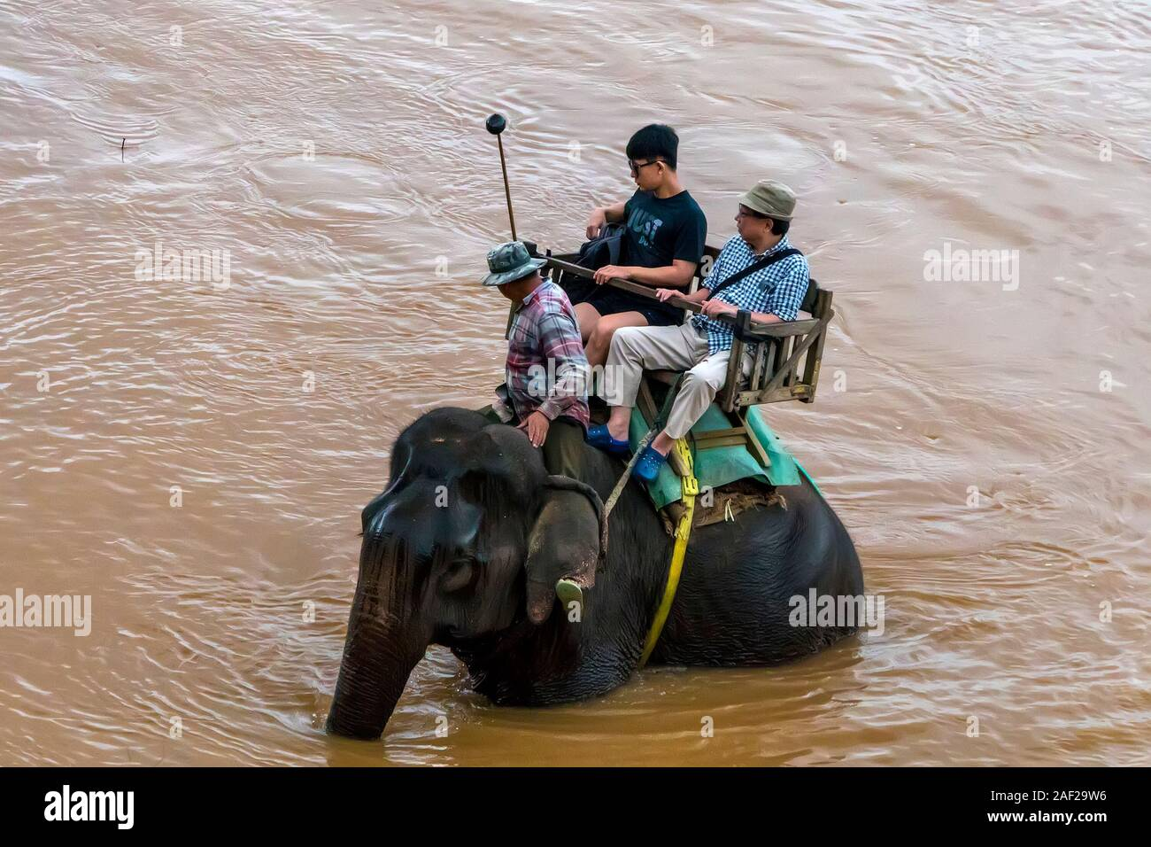 Chinese Tourists go on elephants trekking. Laos. Luang Prabang - 15 January 2019 Stock Photo