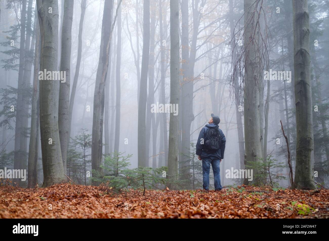 Misty Forest And Man High Resolution Stock Photography And Images Alamy