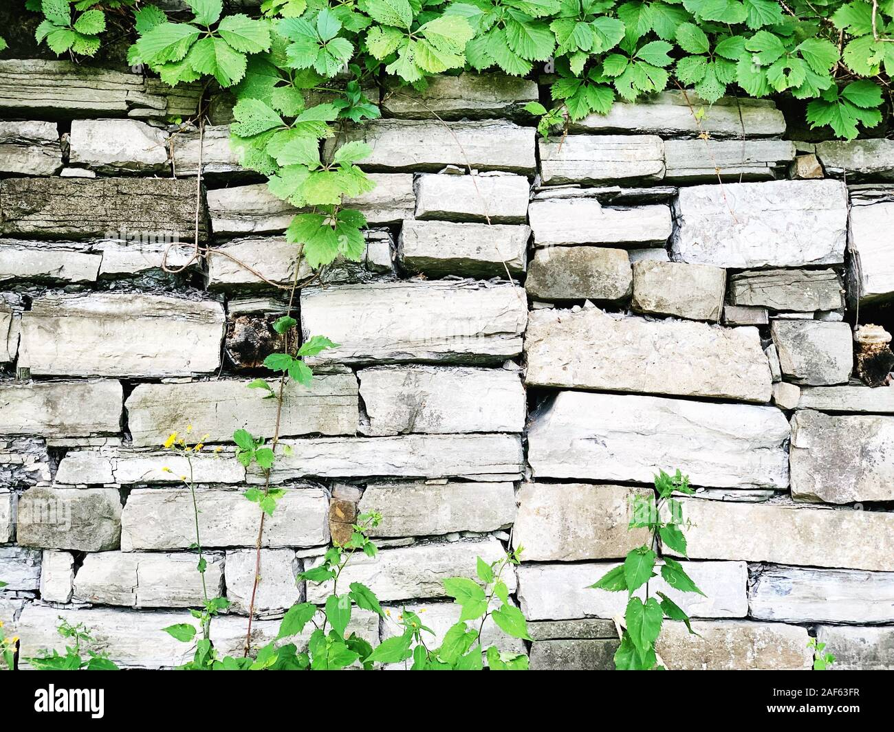Closeup Of White Brick Wall With Plants Brick Background Stock Photo Alamy