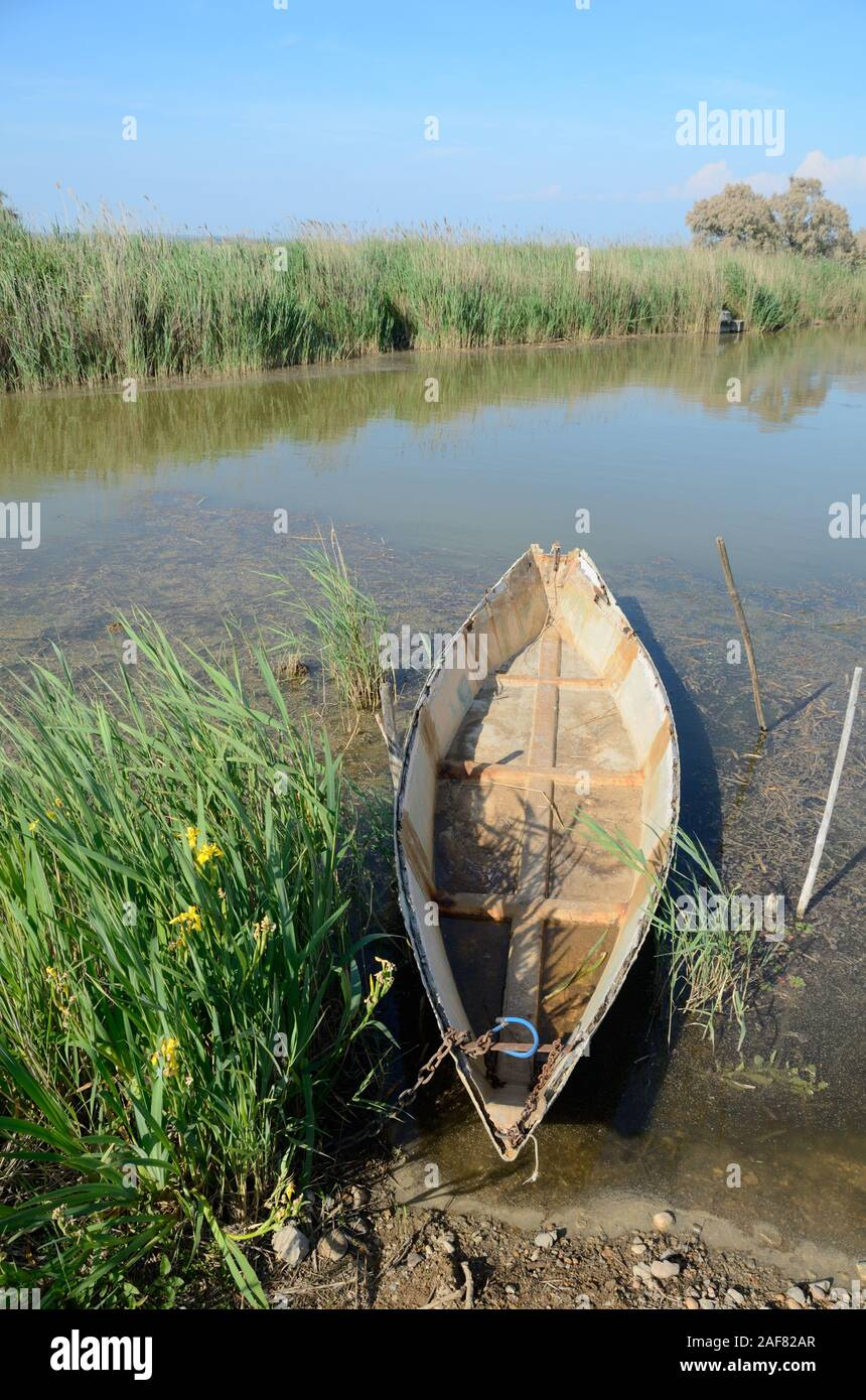 Rowing Boat, Flat Boat or Wooden Boat, Reed Beds, Marshland or Marshes in Camargue Werlands or Nature Reserve, Perc naturel régional, Provence, France Stock Photo