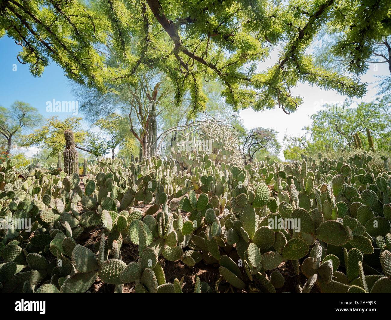 Exterior View Of The Famous Cactus Garden Of Ethel M Chocolate Factory At Las Vegas Henderson Stock Photo Alamy