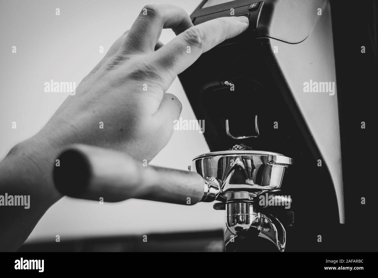 A portrait of a barista pressing the button of a coffee grinder to fill a portafilter full of freshly grinded coffee grounds from fresh coffee beans. Stock Photo