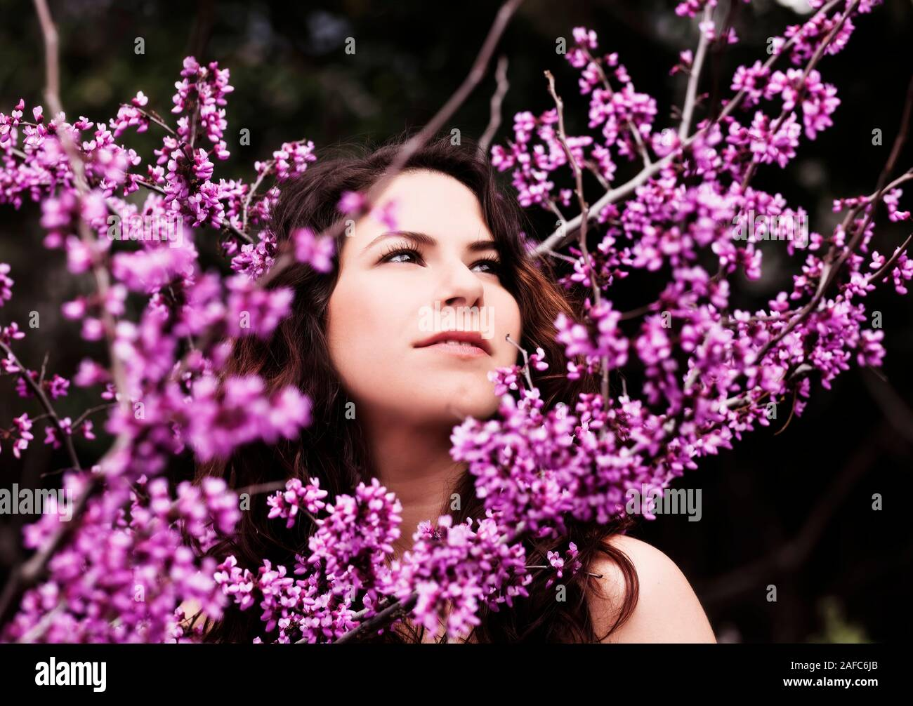 Attractive Young Caucasian Woman Outdoor Portrait Standing Amid Red Bud Tree Blossoms Stock Photo