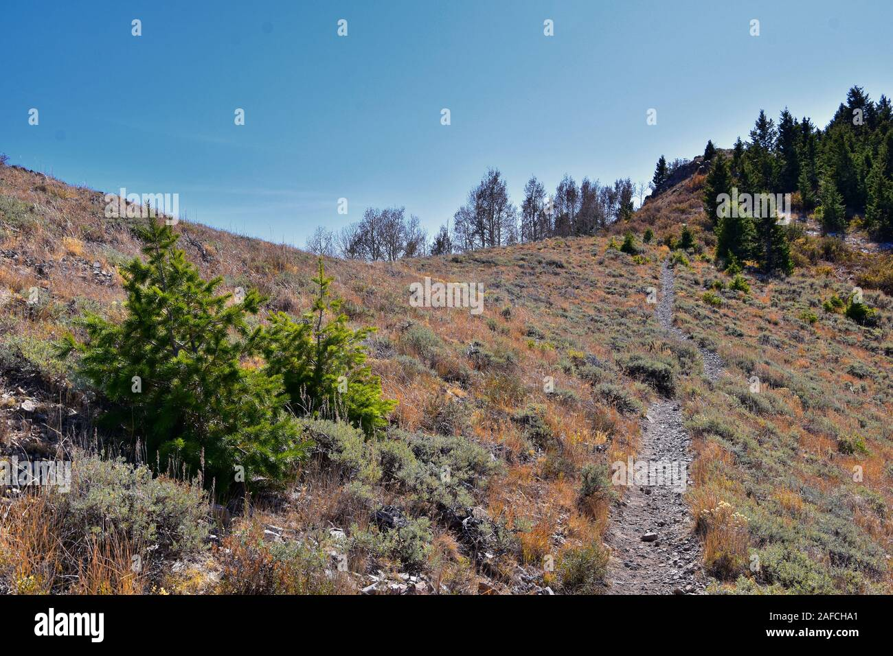 butterfield canyon open 2020