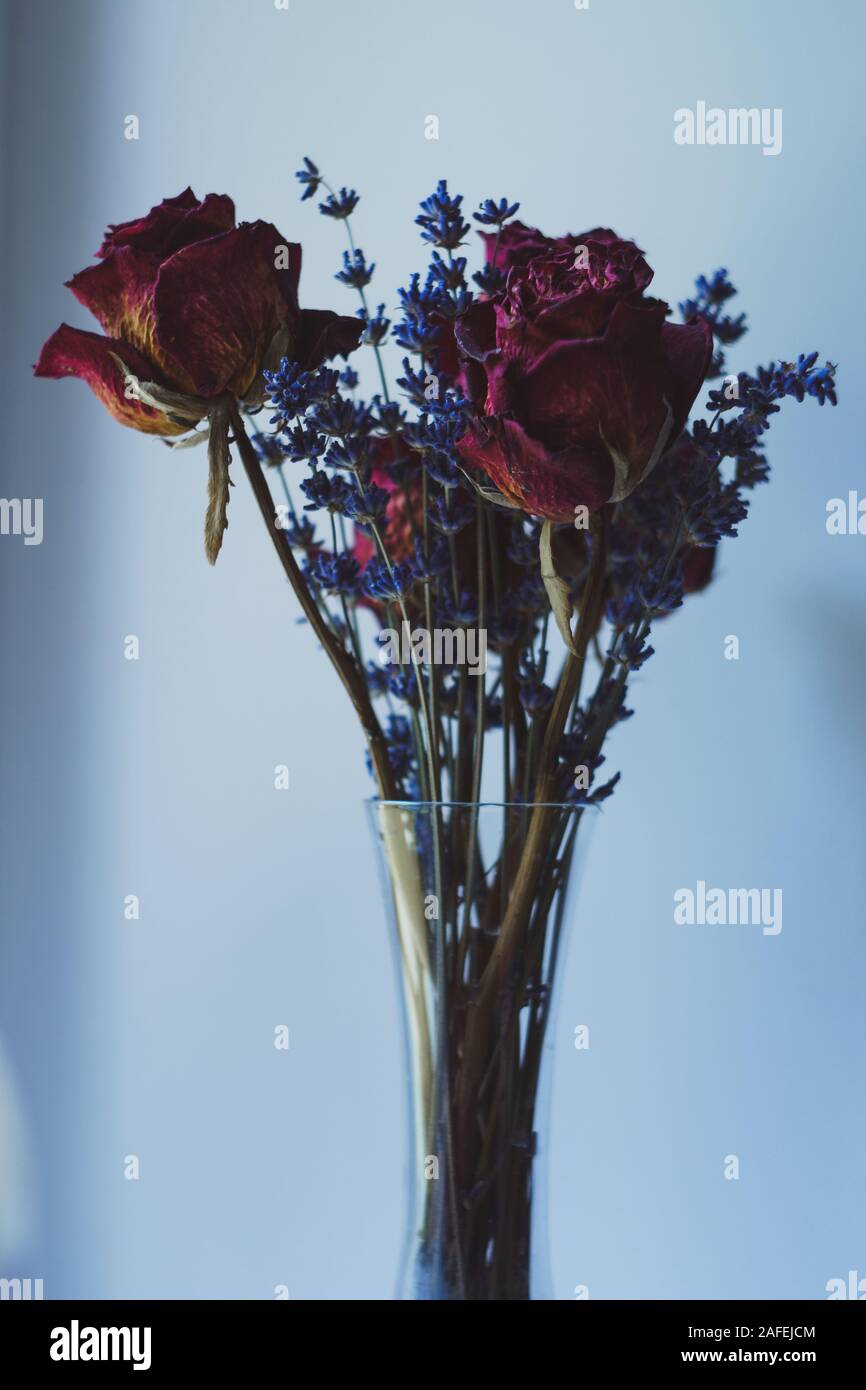 Set Of Dried Purple Red Roses And Lavender In A Tall Narrow Transparent Glass Vase Elegant Muted Colors Stock Photo Alamy