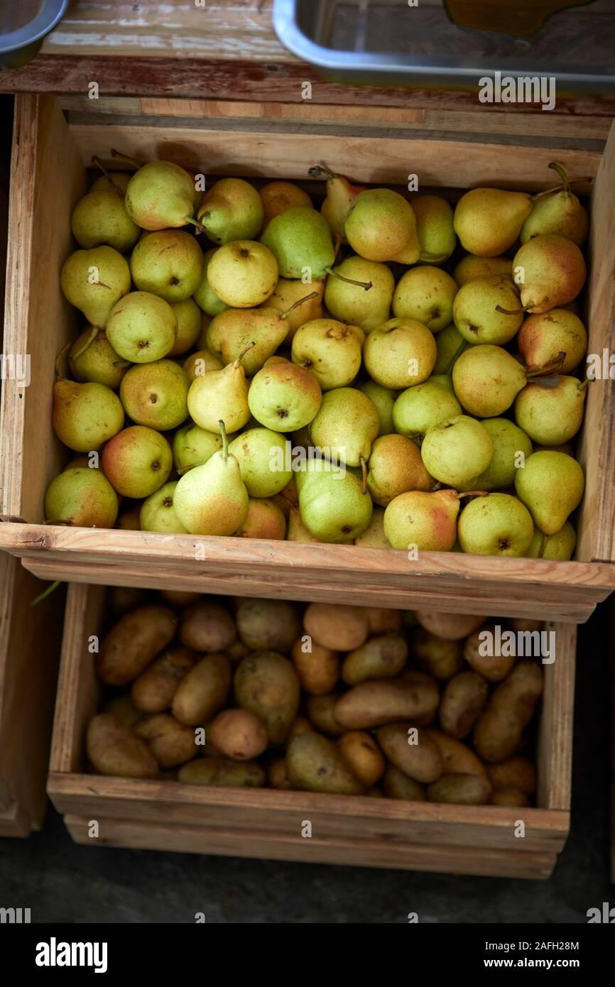 medlar fruit betting odds