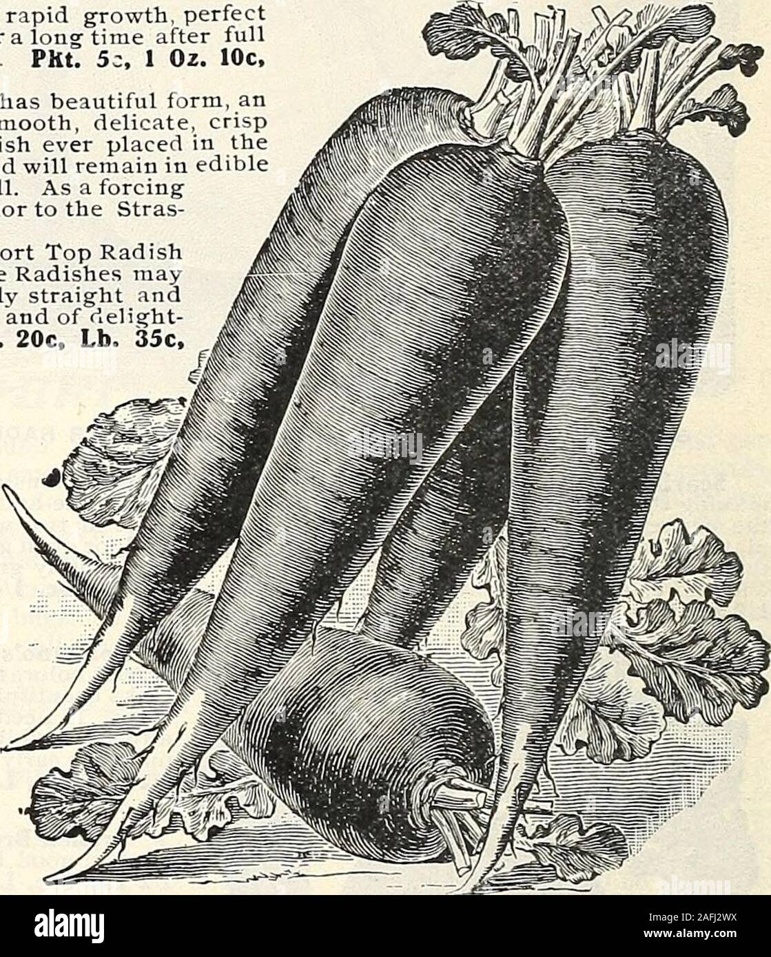 . J. Bolgiano & Son : 1818 1904. *?*<*****r*********?*$. NEW GLASS RADISH. NEW WHITE STRASBURG RADISH. §pffip BOLGITINOS NEW GL71SS RHDISH. Quick growth, small top, bright color. The best forcing Radish. This brilliant,uniform Radish is not so large as the Long Scarlet Radish, but is similiar in form;holds its size without losing its nice proportions; is slow to run to seed. Marketgardeners find it satisfies the market demand, and sells better than other longRadishes. Plant at once and see what a good Radish it is. For sale in our sealedpackages. PKt. 5c, Oz. 10c, 1/4 Lb. 15c, 1/2 Lb. 25c, Stock Photo