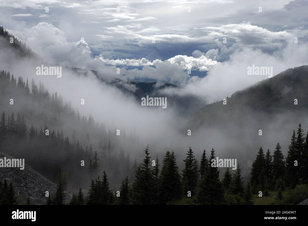 Breathtaking Scenery Of High Mountains And Green Trees Enveloped With Fog Under The Clouds Stock Photo Alamy Clouds mountains trees grass spruce fog