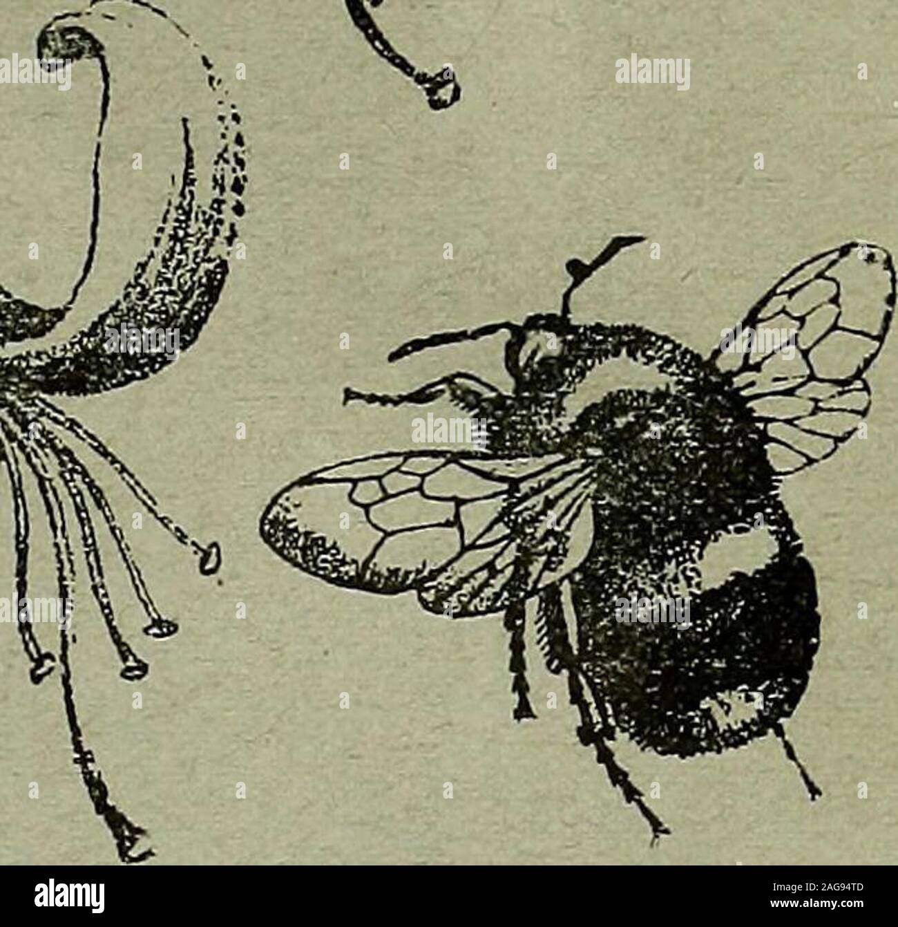 . The Entomologist's record and journal of variation. THE ENTOMOLOGISTS RECORD AND JOURNAL OF VARIATION Edited by J. yv. TUTT, F.E.S. Assisted by T. HUDSON BEARE, b.sc, f.e.s., f.r.s.e.M. BURR, B.A.,r<z.s., f.l.s., t.e.s. T. A. CHAPMAN, m.d., i-.z.s., f.e.s.Jas. E. COLLIN, F.E.S. H. St. J.K.DONISTHORPE f.z.s. f.e.s SEPTEMBER 15th, 1906. ^ Price SIXPENCE (net). (WITH PLATE.) Subscription for Complete Volume, post free (Including all DOUBLE NUMBERS, etchSEVEN SHILLINGS, TO BE FORWARDED TO J. HERBERT TUTT, 119, Westcombe Hill, Bi.ackheath, London, S.E. Stock Photo