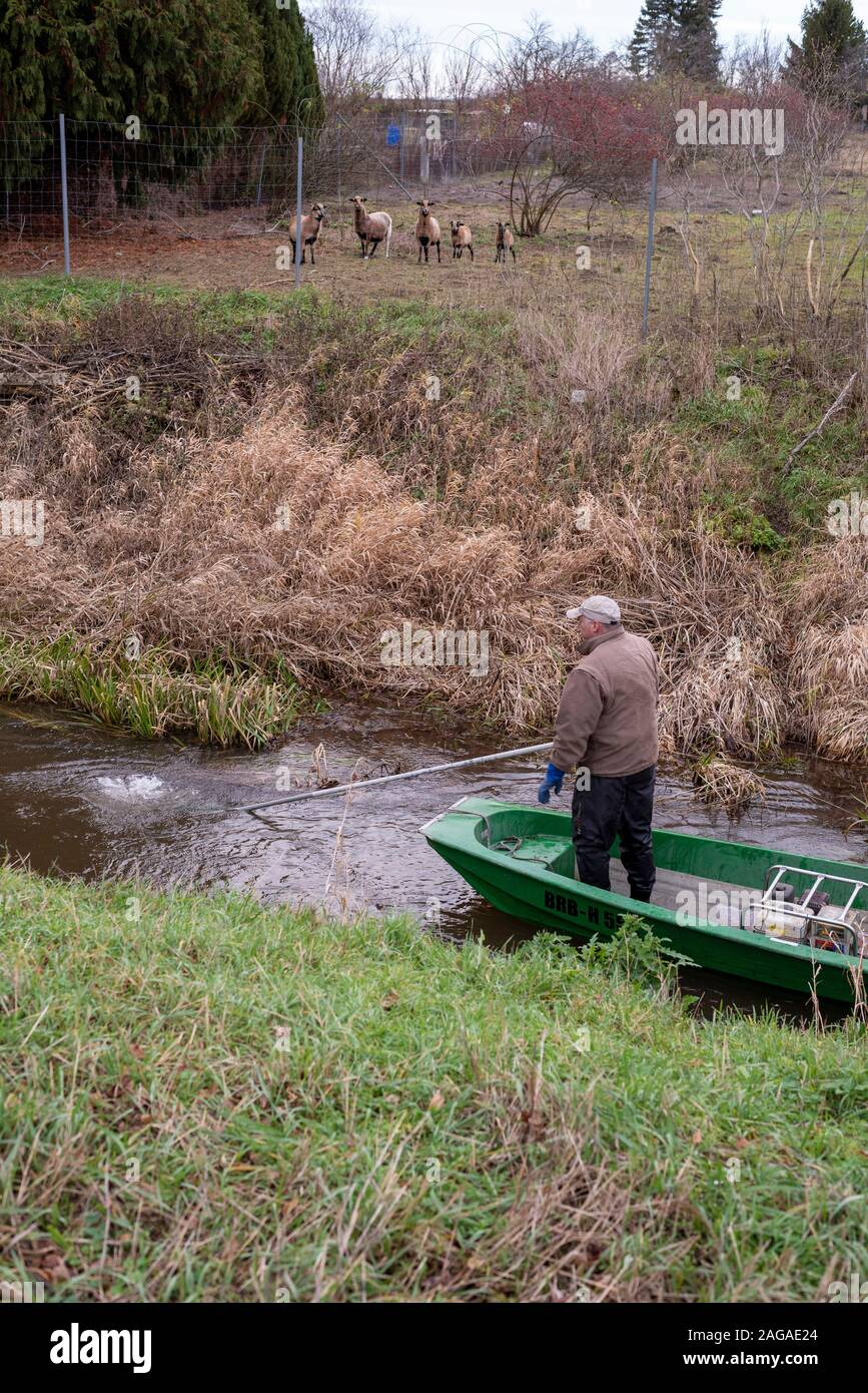 Zerbst, Saxony-Anhalt, Germany. 18th Dec 2019. Jens Winterheuser from the Institut für Binnenfischerei Potsdam-Sarow searches for spawning salmon with an electric fishing gear. Over the past ten years, a total of 143,500 young salmon and 90,300 sea trout hatchlings have been released into the Nuthe near Zerbst. The fish migrate across the North Sea to the Atlantic and return from there to spawn in the Nuthe after a few years. Credit: Mattis Kaminer/Alamy Live News Stock Photo