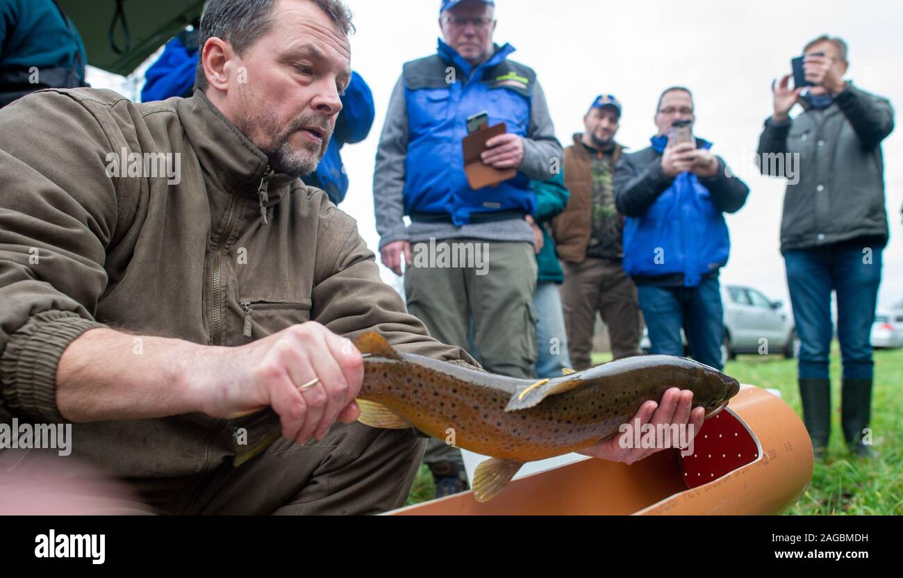 Nutha, Germany. 18th Dec, 2019. Steffen Zahn, project manager of the Migratory Fish Programme Saxony-Anhalt of the Institute for Inland Fisheries in Potsdam, holds a sea trout in his hands at the Nuthe which he wants to measure, weigh and send. The fish had been caught during the trial fishing on the Nuthe. In the Nuthe a total of 143500 young salmon and 90300 sea trout hatchlings have been released so far. Now the animal has returned to the waters near Zerbst. Credit: Klaus-Dietmar Gabbert/dpa-Zentralbild/ZB/dpa/Alamy Live News Stock Photo