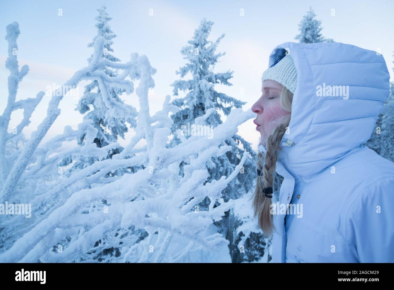 Woman outside in the snow blowing snow off of a frosty branch Stock Photo