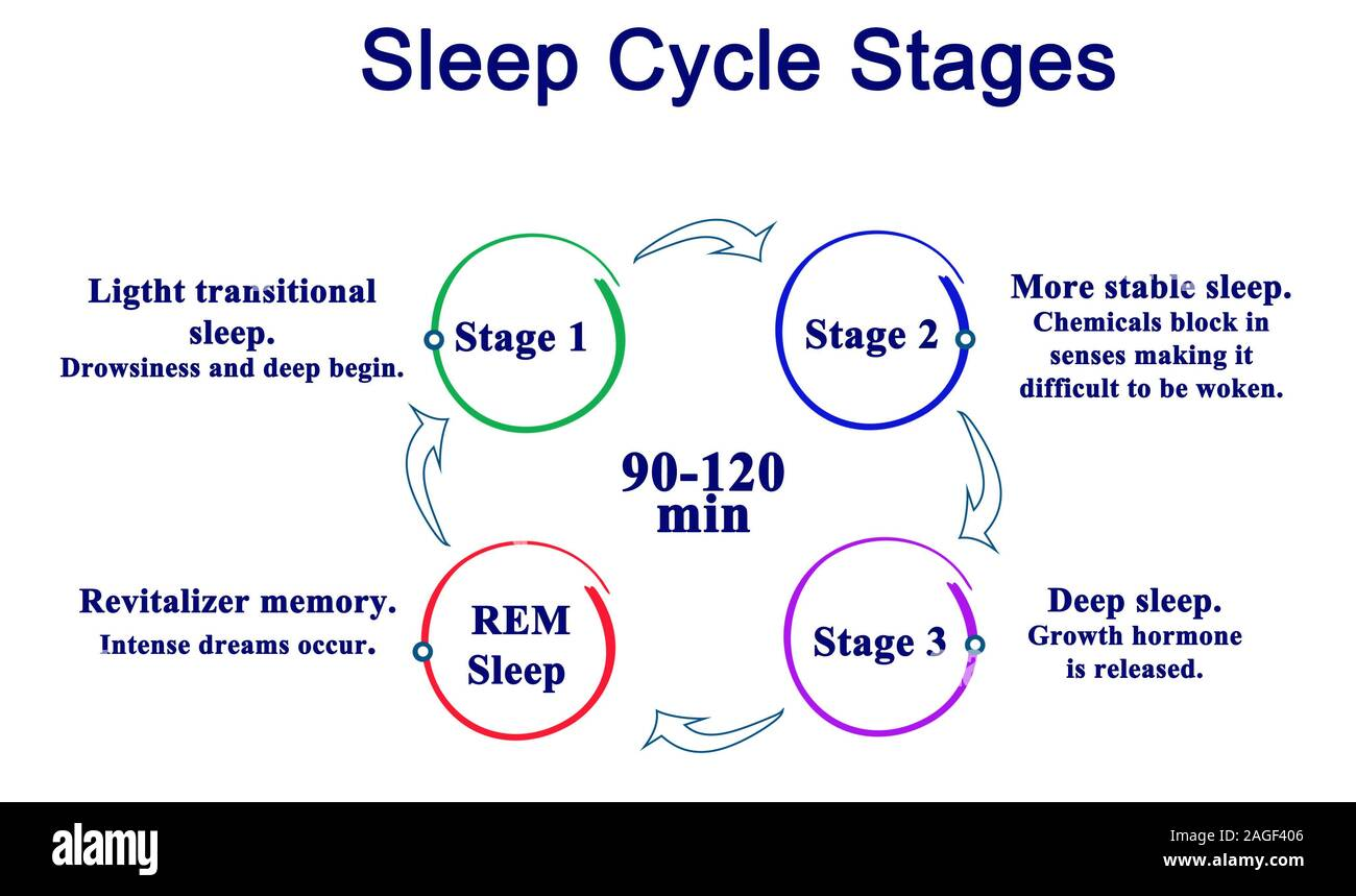 diagram of sleeping sleep cycle stages stock photo 337163910 alamy  sleep cycle stages stock photo