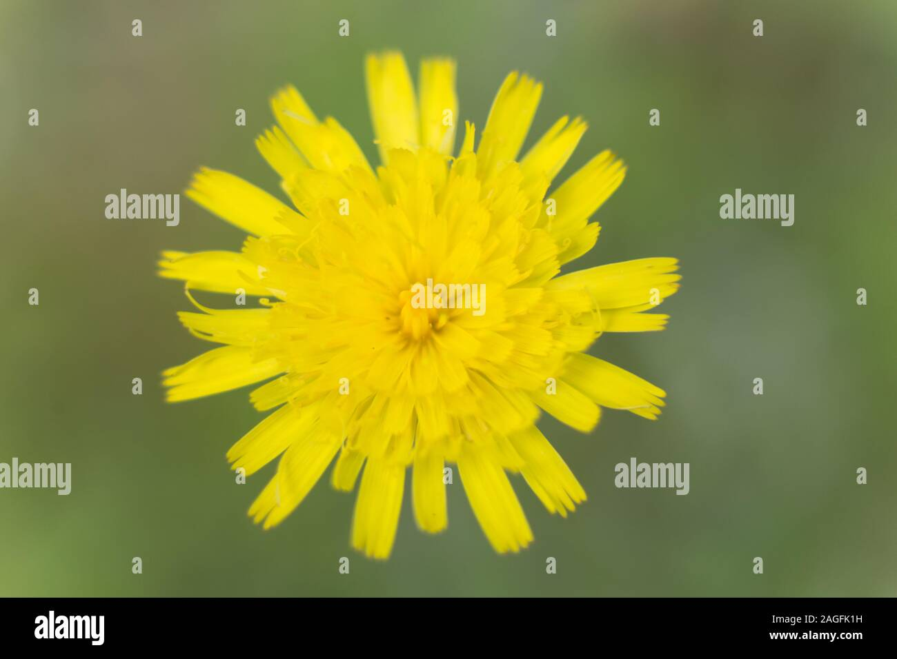 A close-up of a bright coloured flower Stock Photo