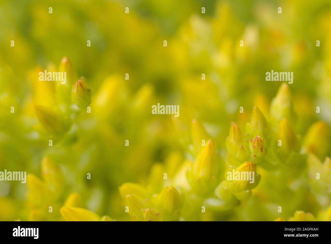 A close-up of a succulent plant Stock Photo
