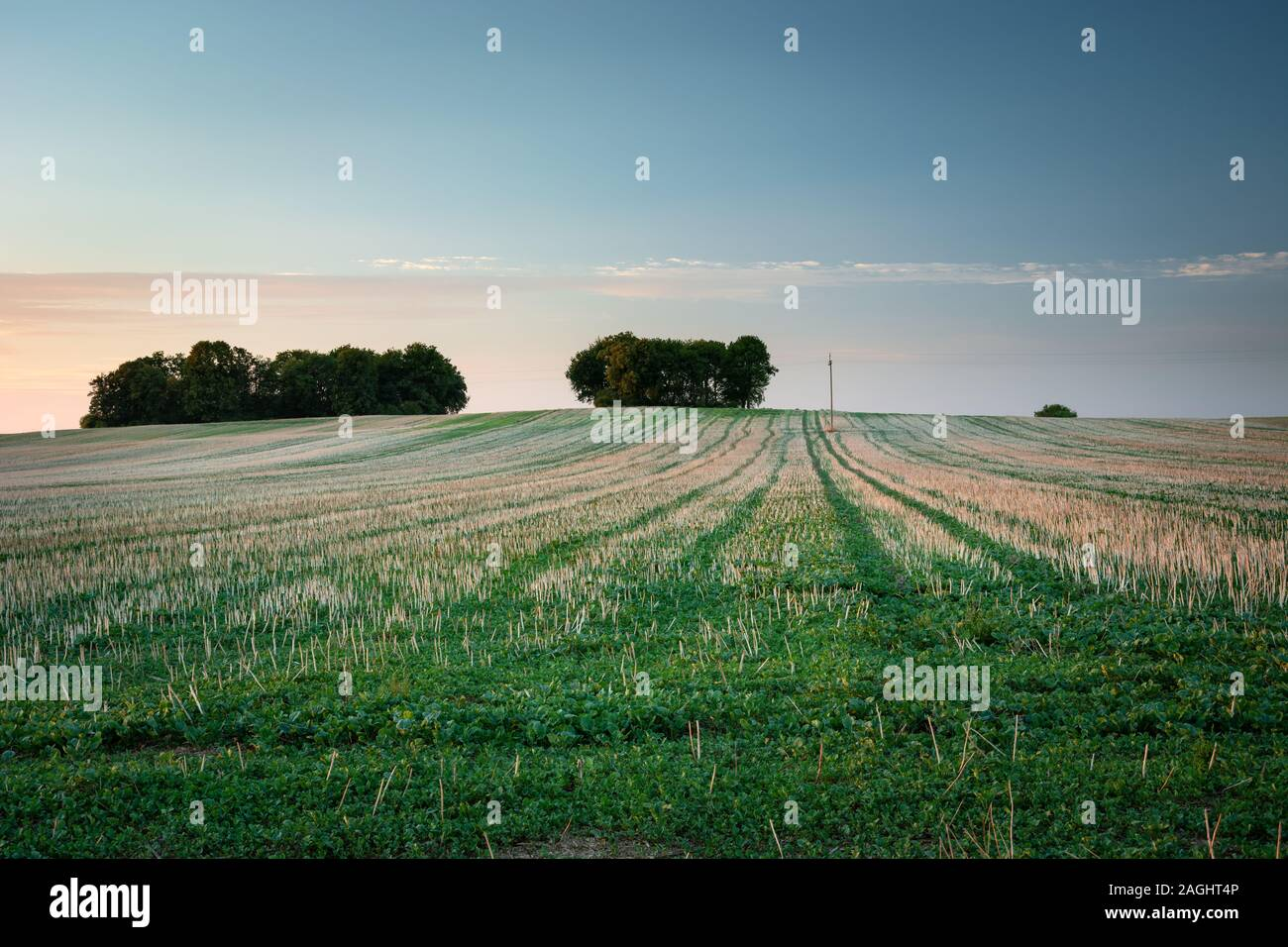 Mown field, trees on the horizon and sky, summer evening view Stock Photo