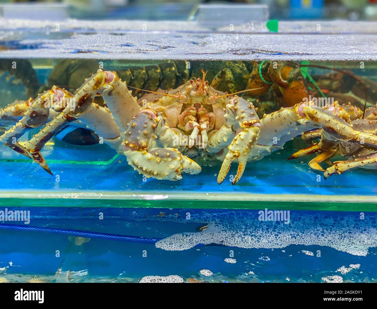 King Seafood Market High Resolution Stock Photography And Images Alamy