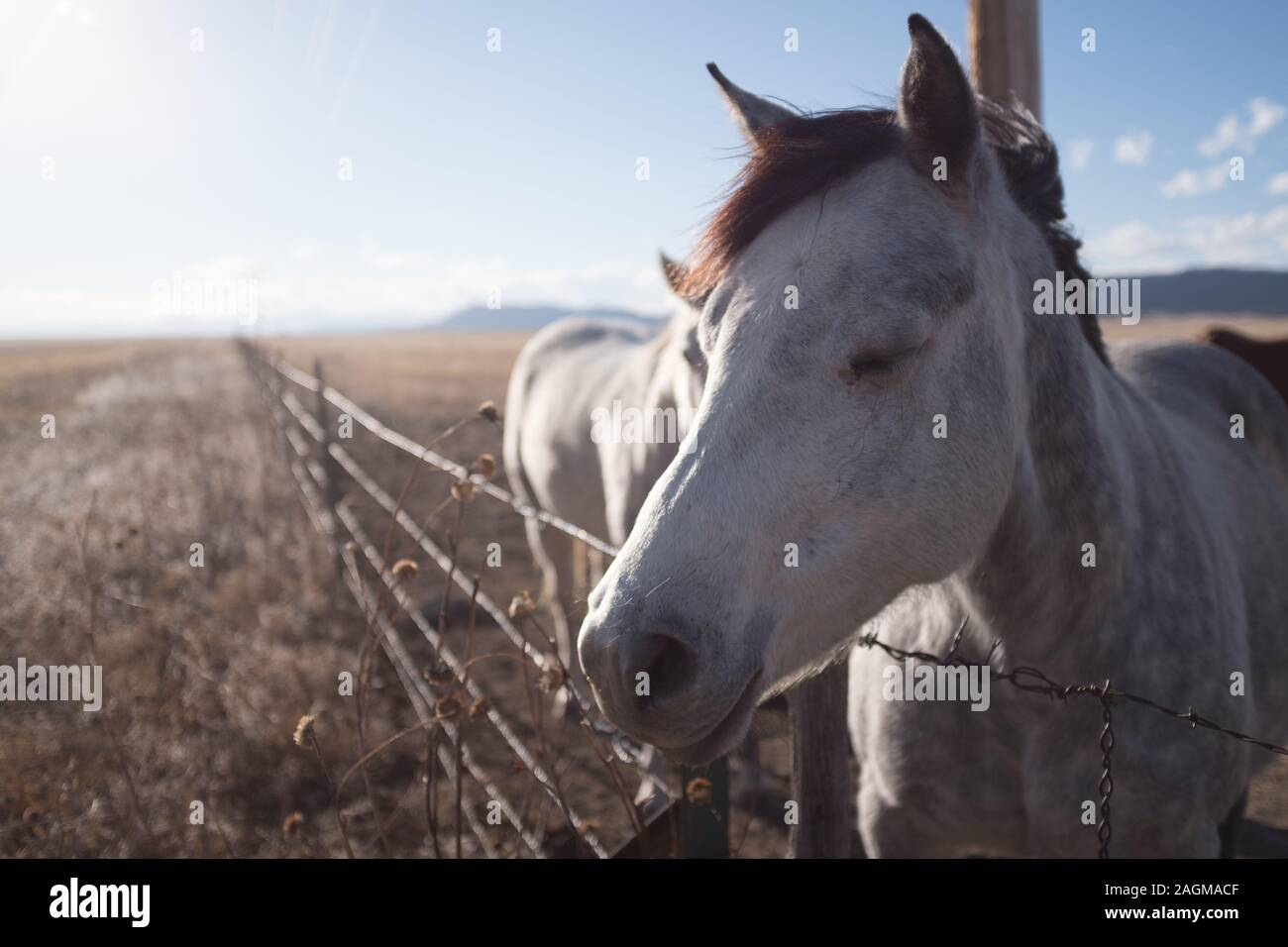 A Closeup Shot Of A Cute White Horse With Closed Eyes On The Countryside Stock Photo Alamy